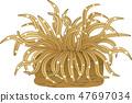 Sea anemones 47697034
