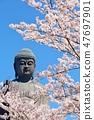 茨城縣春天的Ushiku大佛和櫻花 47697901