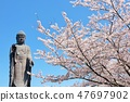 茨城縣春天的Ushiku大佛和櫻花 47697902