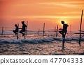 Traditional stilt fishing in Sri Lanka 47704333