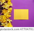 Colorful invitation or greeting card with flowers 47704701