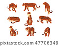 Powerful tiger in different actions set of cartoon vector Illustrations on a white background 47706349