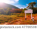 Morning forest scenery in tropical forest 47706508