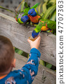 Little boy feeding parrots in zoo 47707363