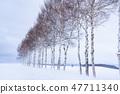 """冬天""""北海道""""美瑛和白樺樹""""靠近七星樹"""" 47711340"""