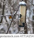 Songbird by a bird feeder 47714254