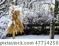 Traditional sheaf of oats in a garden 47714259
