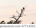 Bird of prey in a tree top 47714261
