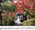 Autumn leaves of Fuchu's forest park 47716912