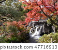 Autumn leaves of Fuchu's forest park 47716913