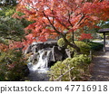 Autumn leaves of Fuchu's forest park 47716918