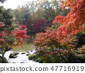 Autumn leaves of Fuchu's forest park 47716919
