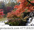 Autumn leaves of Fuchu's forest park 47716920