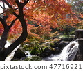Autumn leaves of Fuchu's forest park 47716921