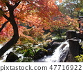 Autumn leaves of Fuchu's forest park 47716922