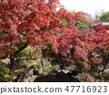 Autumn leaves of Fuchu's forest park 47716923