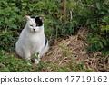 뚱뚱한 고양이 47719162