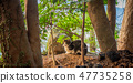 Cat in the forest 47735258
