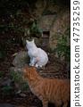 To turn around a cat 47735259