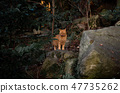 Cat in the forest 47735262