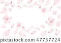 Light pink petals and Sakura flowers 47737724