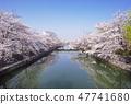 교토 소수성 베리의 벚꽃길 벚꽃 이미지 봄 낭만의 교토 소수성 골목 47741680
