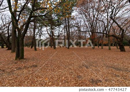 요요 기 공원의 숲의 단풍 단풍 나무 47743427