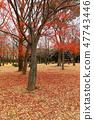 요요 기 공원의 숲의 단풍 단풍 나무 푸른 하늘 47743446