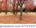 요요 기 공원의 숲의 단풍 단풍 나무 푸른 하늘 47743447