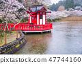 (치바현) 모 공원의 벚꽃 비 47744160