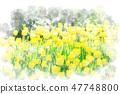 Tulip field watercolor style 47748800