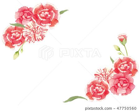 Carnation watercolor illustration 47750560