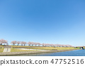 아라카와 아카바네 사쿠라 즈 츠미 녹지의 벚꽃길 북구 47752516
