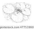 Drawing of Nymphaea Plant Flower and Leaves on Water 47753960