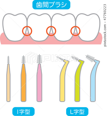 Interdental brush and teeth 47760223