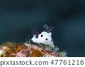 熊貓金槍魚海牛 47761216