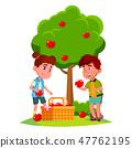 Kids Harvest Apples In Basket Near Apple Tree Vector. Isolated Illustration 47762195