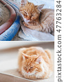 Fluffy cat before and after adoption in home.  47763284