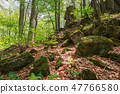 huge mossy rocks in the forest 47766580