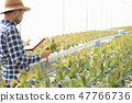 vegetables grown in hydroponics grow very well. 47766736