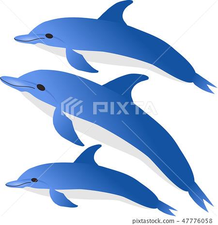 ปลาโลมา 47776058