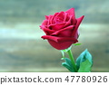 Red roses with water drop on blur background. Sele 47780926