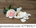 Pink rose, petals scattered on the wood background 47780927