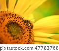 一隻蜜蜂 47783768