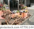 野豬和木頭馴鹿對象 47791144