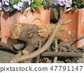 วัตถุที่ทำจากไม้หมูป่า 47791147