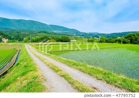 初夏の田園風景 47795752
