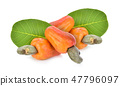 Red cashew fruit isolated on white background 47796097