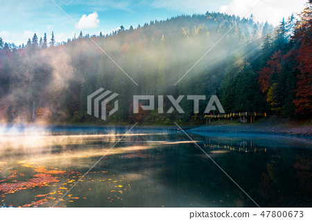 lake among the pine forest in autumn 47800673