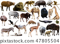 Birds, mammal and other animals of Africa isolated 47805504